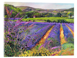 Acrylic print  Lavender field - Timothy Easton