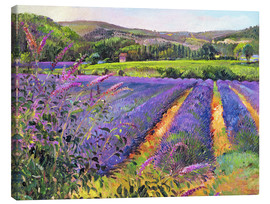 Canvas print  Lavender field - Timothy Easton