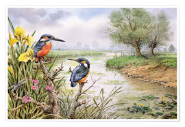Premium poster  Kingfishers on the riverbank - Carl Donner