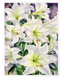 Premium poster  White lilies, 2008 - Christopher Ryland