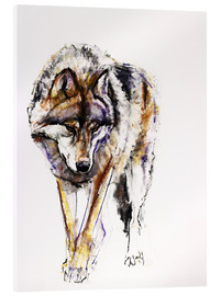 Acrylic print  European Wolf - Mark Adlington