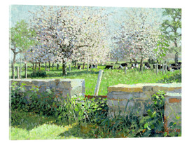 Acrylic glass  Cows in the Orchard - Lucy Willis