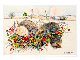 Premium poster  Hedgehogs in Hedgerow Basket - E.B. Watts