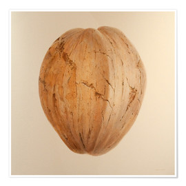 Poster  Coconut from Sri Lanka - Lincoln Seligman
