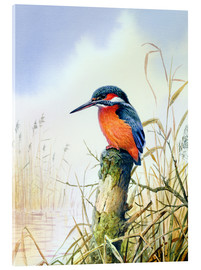 Acrylic print  Kingfisher - Carl Donner