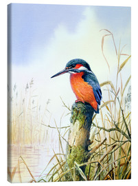 Canvas print  Kingfisher - Carl Donner
