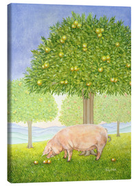 Canvas print  Orchard Pig - Ditz