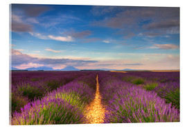 Acrylic print  Fields of Lavender, Provence - Circumnavigation