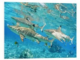 Foam board print  Blacktip - M. Swiet