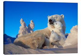 Canvas print  Polar bears cuddling in snow - Tom Soucek
