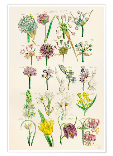 Premium poster Wildflowers, Sowerby 1281-1300