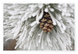 Premium poster Pinecone in frost