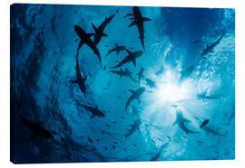 Canvas print  Grey Reef Sharks - Dave Fleetham