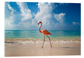 Acrylic print  Flamingo on the beach - Ian Cuming