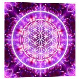 Acrylic print  Flower of Life, transformation - Dolphins DreamDesign
