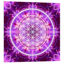 Forex  Flower of Life - Transformation - Dolphins DreamDesign
