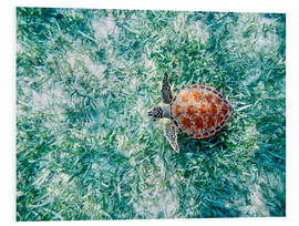 Foam board print  Green sea turtle - M. Swiet