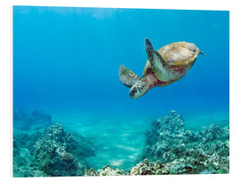 Foam board print  Green Turtle - M. Swiet