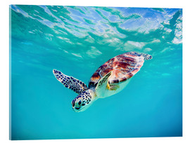 Acrylic glass  Green Turtle - M. Swiet