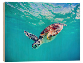 Wood print  Green Turtle - M. Swiet