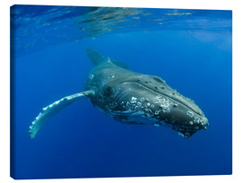 Canvas  Humpback Whale - M. Swiet