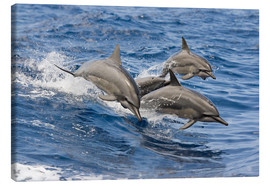 Canvas print  Dolphins jump in - Dave Fleetham