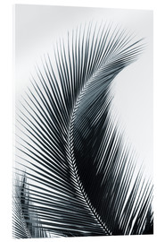 Acrylic print  Palm fronds - Larry Dale Gordon