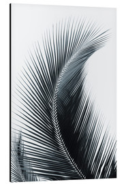 Alu-Dibond  Palm fronds - Larry Dale Gordon