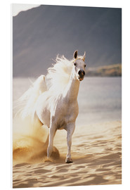 Forex  White horse in the morning light - Vince Cavataio