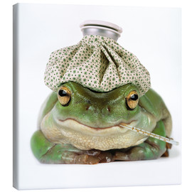 Canvas print  Sick frog - Darwin Wiggett