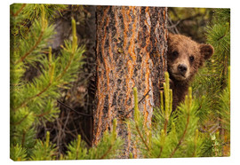 Canvas  Grizzly bear behind a tree - Robert Postma