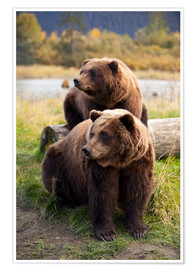 Premium poster Two brown bears