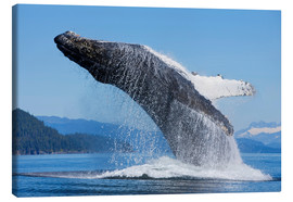 Canvas print  Jumping Humpback Whale - John Hyde