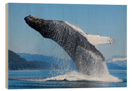 Wood print  Jumping Humpback Whale - John Hyde