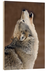 Wood print  Howling gray wolf - Mark Newman