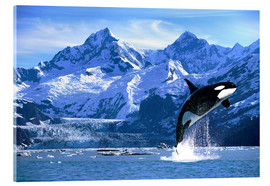 Acrylic glass  Orca in front of a glacier - John Hyde