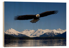 Wood print  Bald Eagle in Tongase National Forest - John Hyde