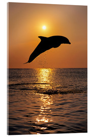 Acrylic print  Dolphin in the sunset - Tom Soucek