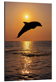 Aluminium print  Dolphin in the sunset - Tom Soucek
