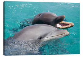 Canvas  Two bottlenose dolphins - Dave Fleetham