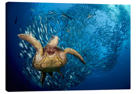 Canvas print  Green sea turtle before Bali - Dave Fleetham