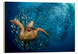 Wood print  Green sea turtle before Bali - Dave Fleetham