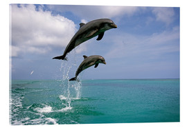 Acrylic glass  Bottlenose dolphins jumping - Tom Soucek
