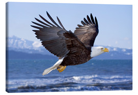Canvas  Flying Bald Eagle - Don Pitcher