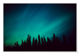 Premium poster  Northern Lights over a spruce forest - Greg Hensel