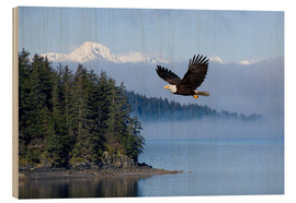 Wood print  Bald Eagle in flight - John Hyde