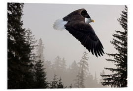 Foam board print  Bald Eagle in the Mist - John Hyde