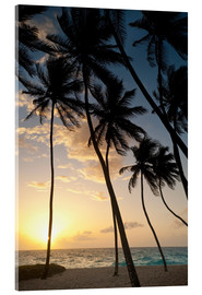 Acrylic print  Palm trees at dawn - Ian Cuming