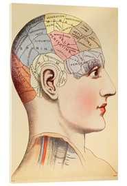 Acrylic print  Map of the human brain - Wunderkammer Collection