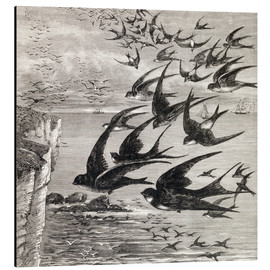 Aluminium print  Annual Migration Of Swallows - Ken Welsh